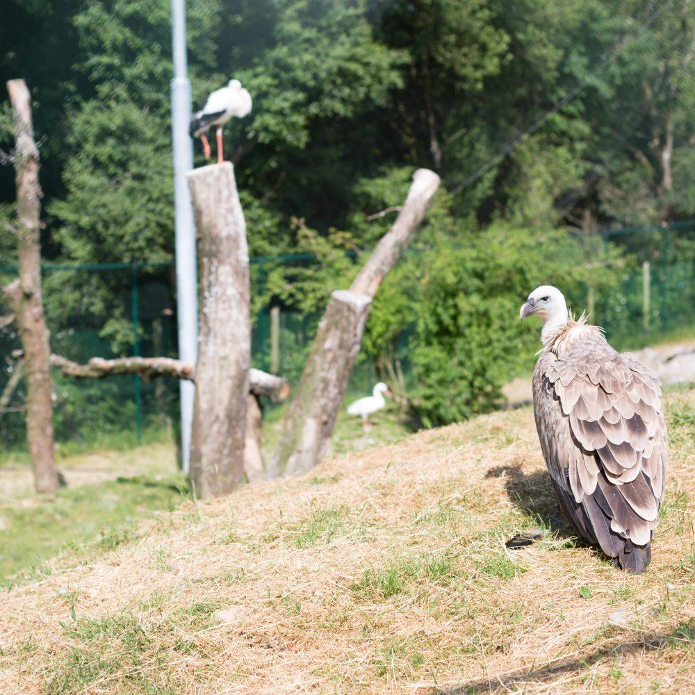 Vignette La volière des vautours