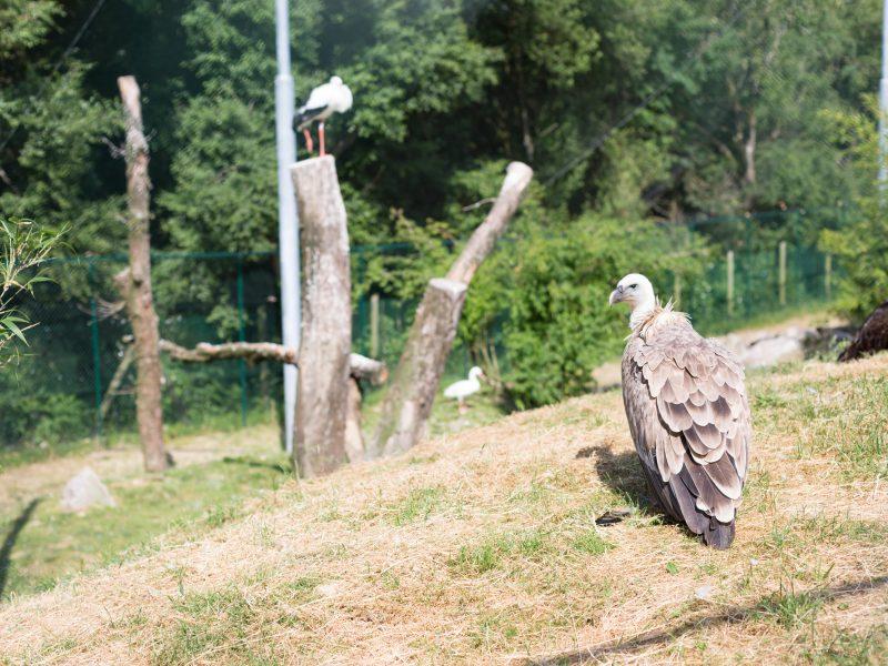 vignette Le repas des vautours