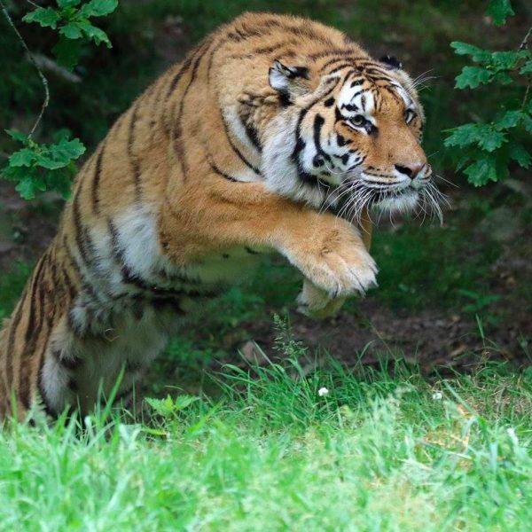 Zoo rencontres en ligne