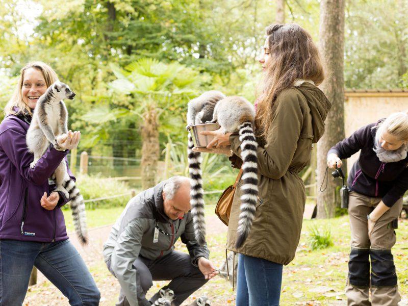 photo Rencontre VIP avec les lémuriens