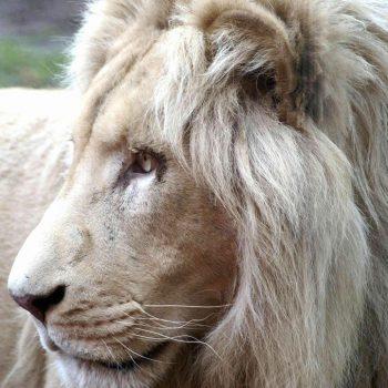 Billet comité d'entreprise Zoo de Jurques
